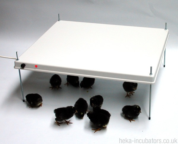 HEKA Poultry Brooder Warm Plate for 65-75 chicks